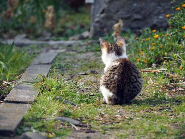 佐栁島、子猫