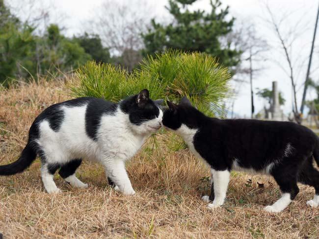 佐柳島、仲良し猫
