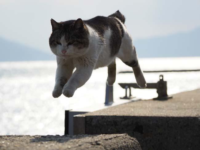 佐栁の飛び猫の逆光