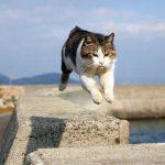 佐柳島の飛び猫に3度目の挑戦