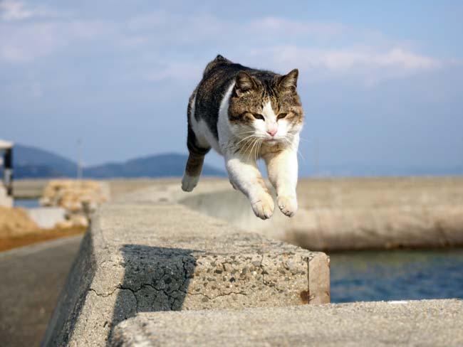 佐栁の飛び猫