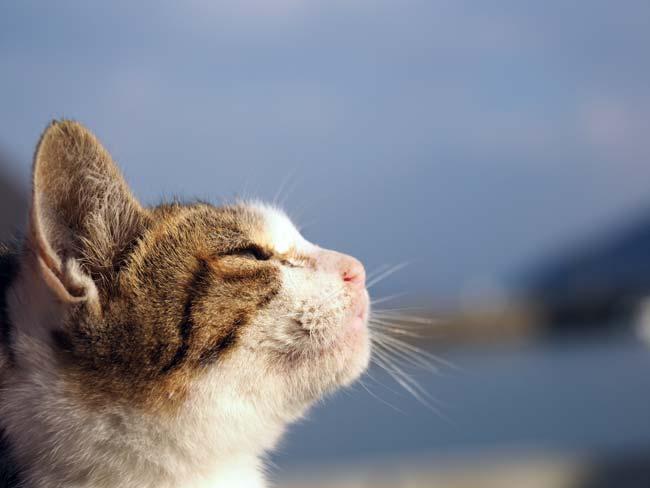 佐柳島、子猫