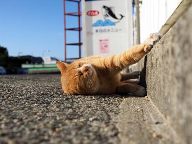 豊島、家浦の猫