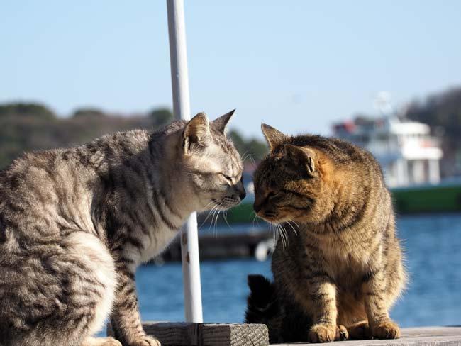 豊島、港での猫撮影