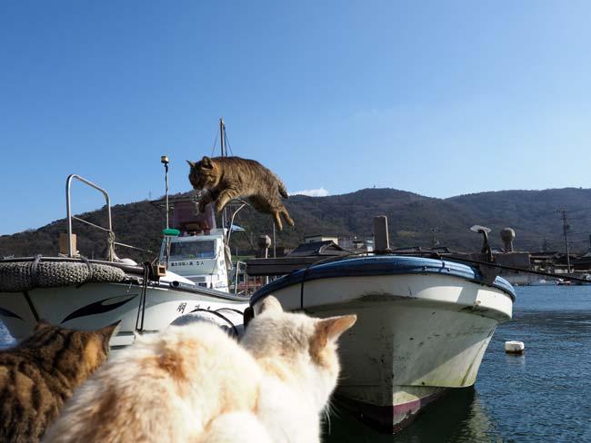 豊島、飛び猫