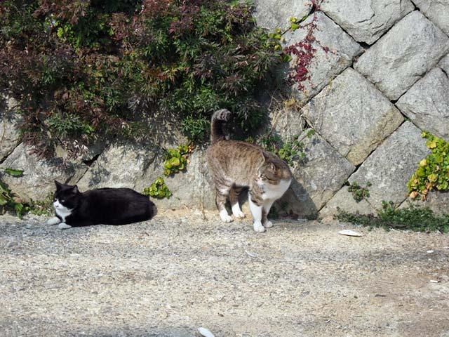 岩屋、川の猫
