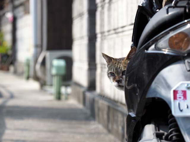 岩屋、バイクに乗る猫