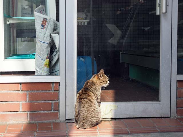 岩屋、店の前の猫
