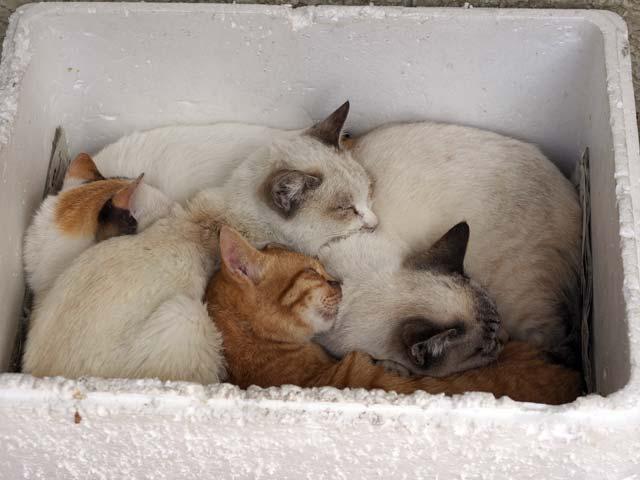 岩屋、保護される猫