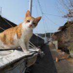 淡路の岩屋の猫密度チェック
