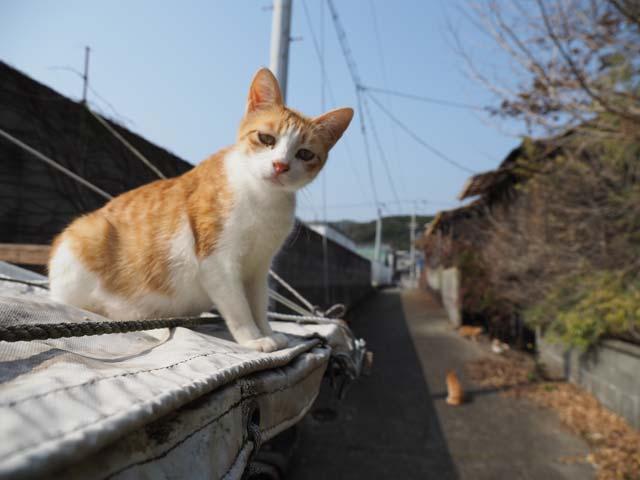 岩屋、屋台の上の猫