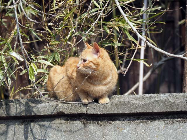 岩屋、家の壁の猫
