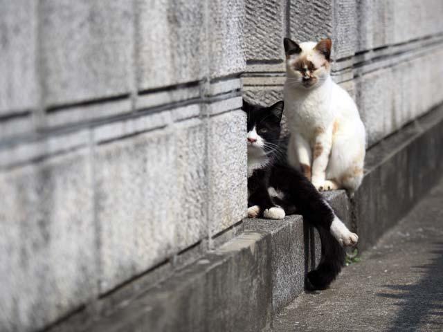 岩屋、民家の猫
