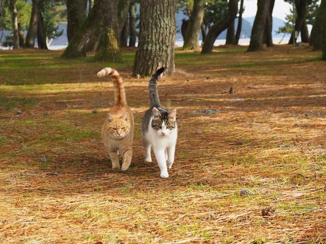 滋賀の仲良し猫