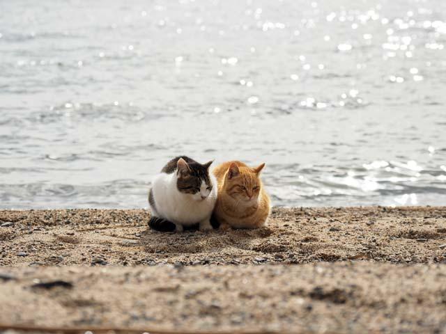 琵琶湖を背景にした猫