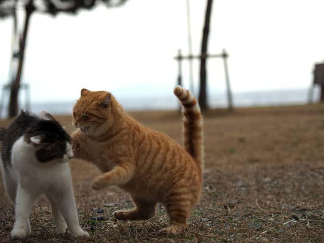 猫の愛情表現
