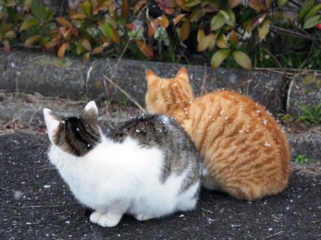 仲良し猫に雪
