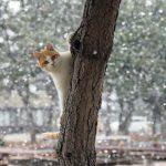 撮ったどー!雪と猫