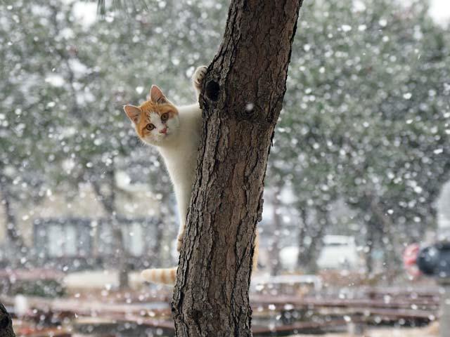 雪の中、木登りする猫