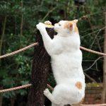 京都、哲学の道の猫密度調査