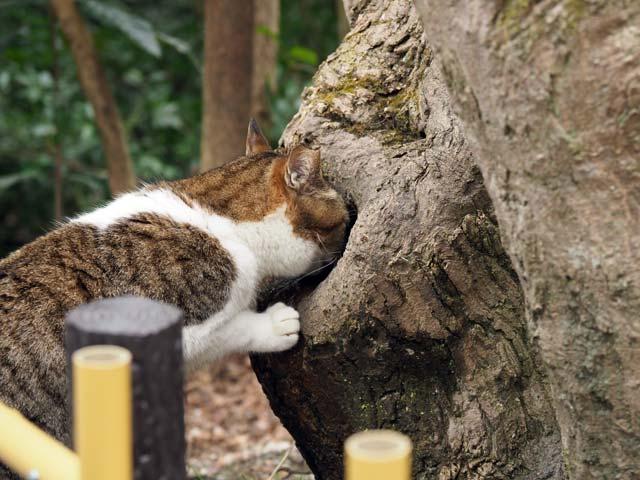 哲学の道、木から水を飲む
