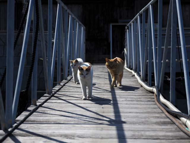 真鍋さん橋と猫
