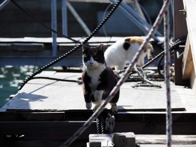 真鍋の飛び猫2
