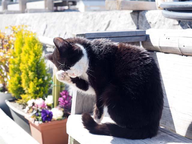 真鍋ベンチの猫