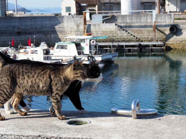 仲良し猫1(真鍋)