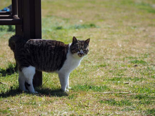 真鍋公園の猫
