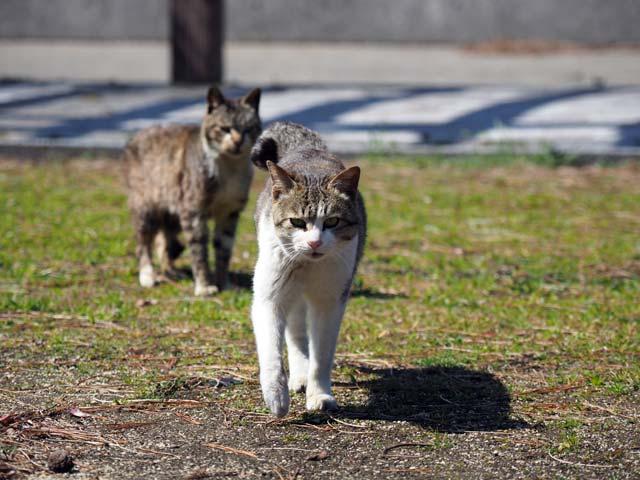 真鍋公園猫とおわかれ