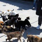 真鍋島(岡山笠岡)の猫島っぷりは健在だったin2019年