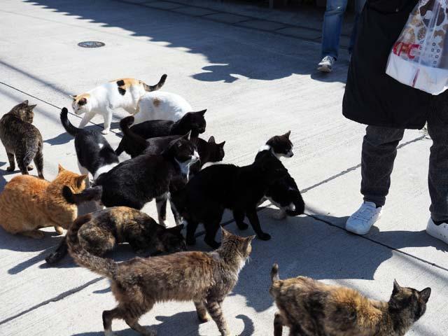 真鍋島は猫天国