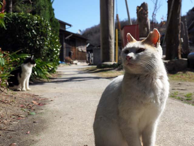 真鍋道端の猫