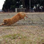 滋賀で元気に遊ぶ猫写真
