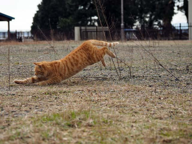 滋賀の猫、ジャンプ