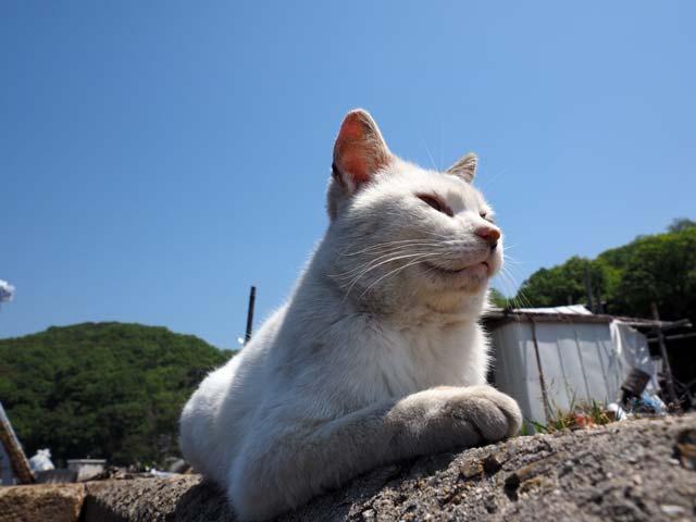 真鍋の猫、青空の下で