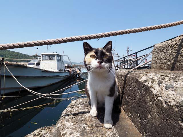 真鍋島、船と猫
