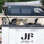 真鍋島の猫たちに会いたい