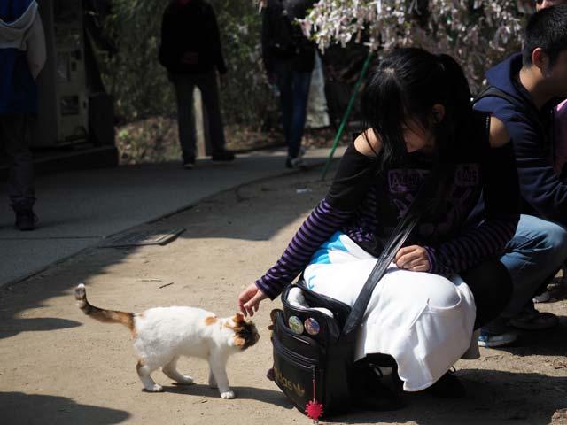 02京都じゃれる猫