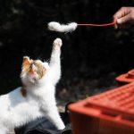 遊ぶ猫写真7連発in京都