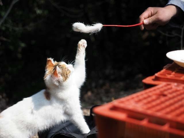 03京都遊ぶ猫