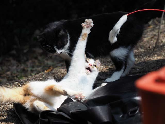 05京都遊ぶ猫