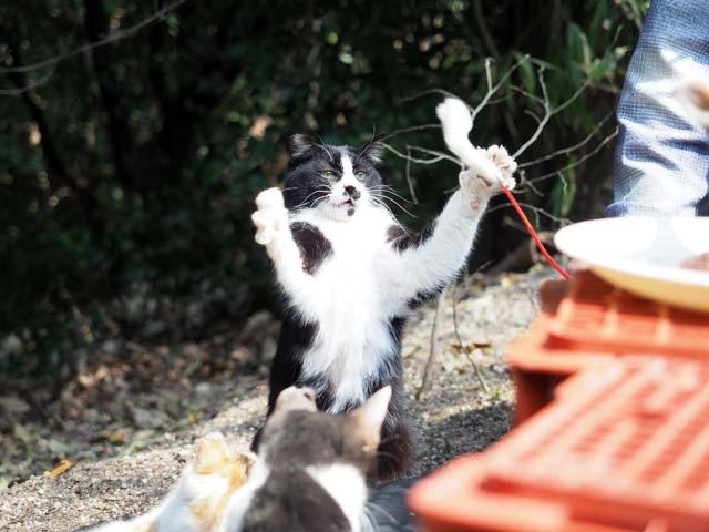 07京都遊ぶ猫