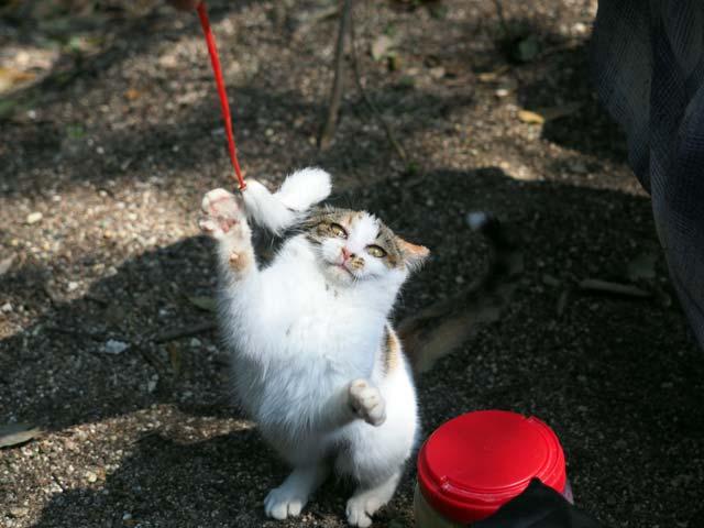 08京都遊ぶ猫
