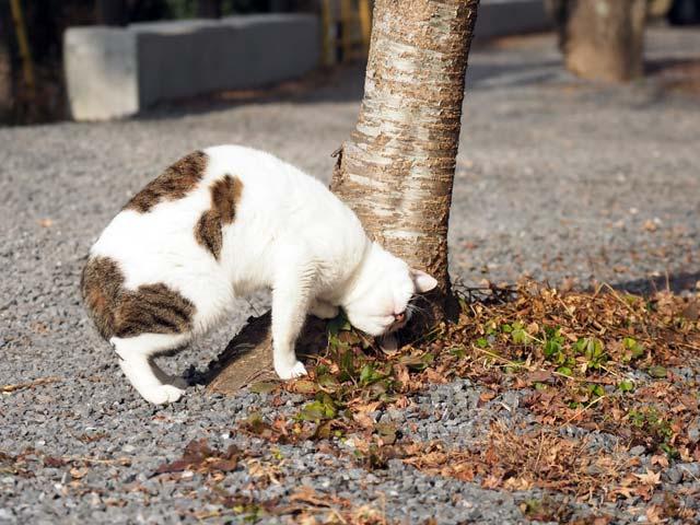 哲学の道の猫