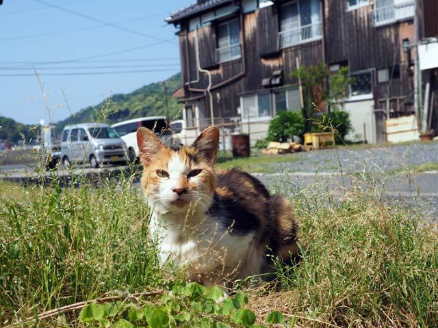 山口室津の猫