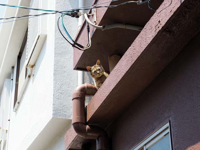 祝島、見下ろす猫