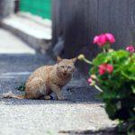 山口県・祝島の猫たち(前編)