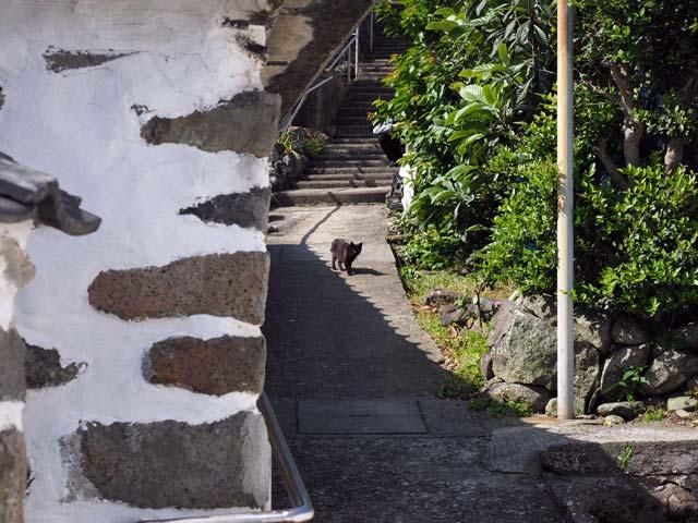 祝島、練塀と猫